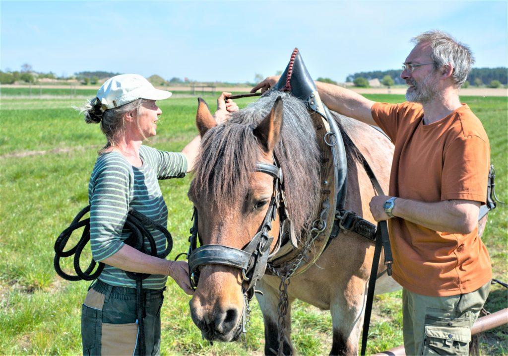 Arbeit auf dem Acker – mit Pferd